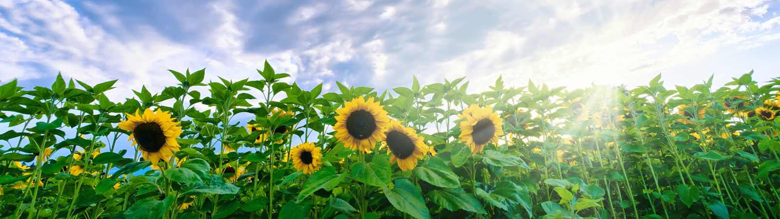 Energía solar en Lerida