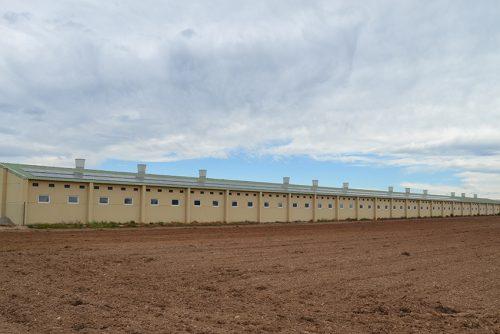 Fotovoltaica aislada en granja porcina de engorde